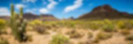 Arizona Desert Landscape .jpg