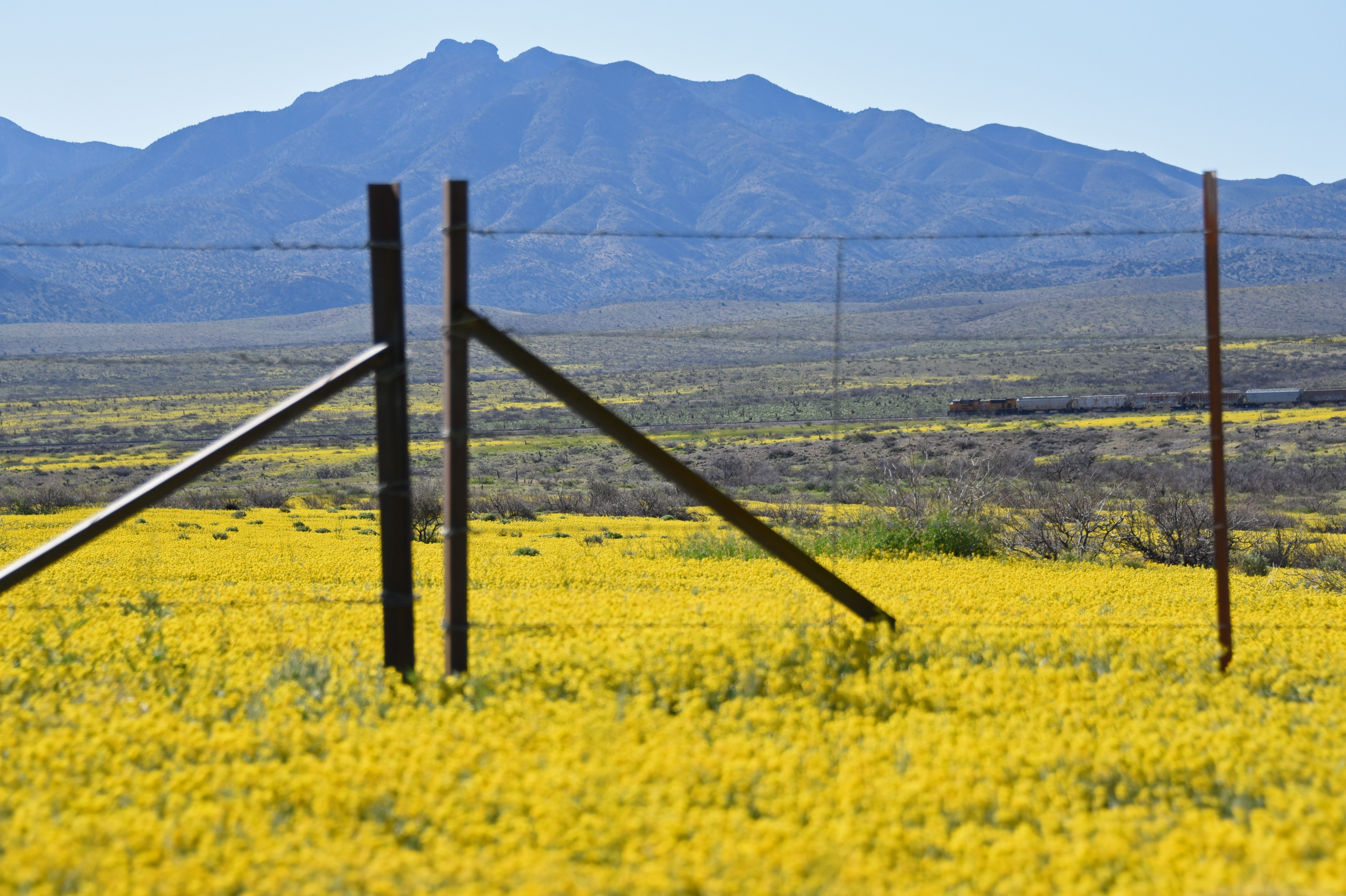 Southern Arizona desert full of yellow w