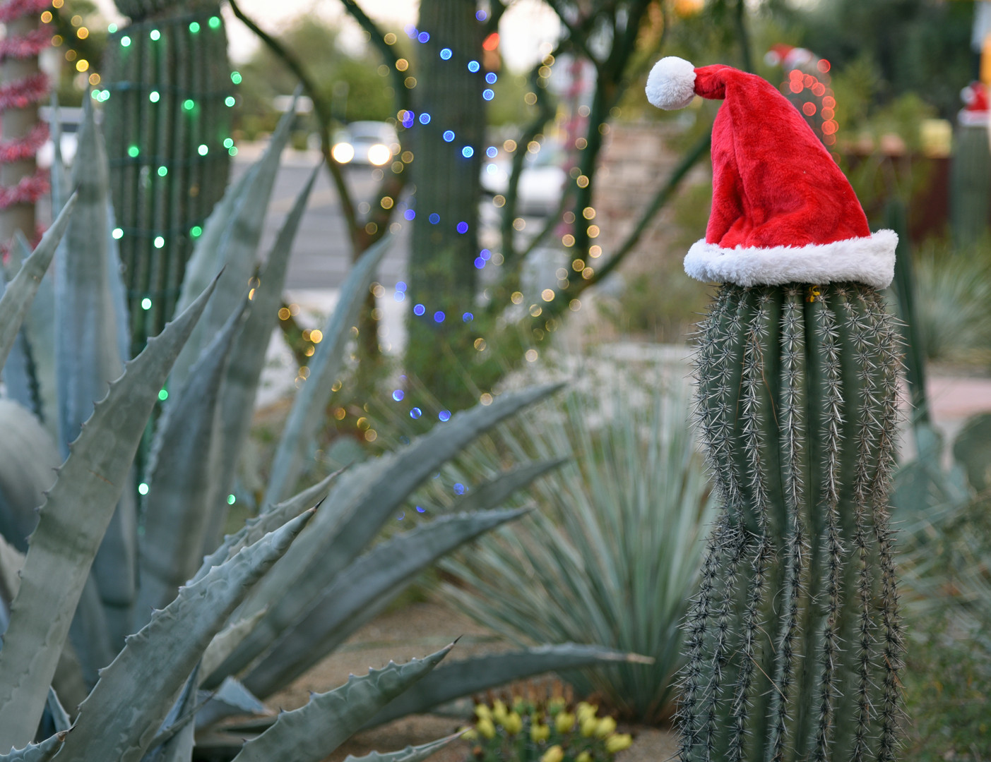 Saguaro cactus with santa hat during day