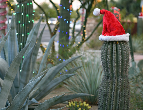 Saguaro cactus with santa hat during day