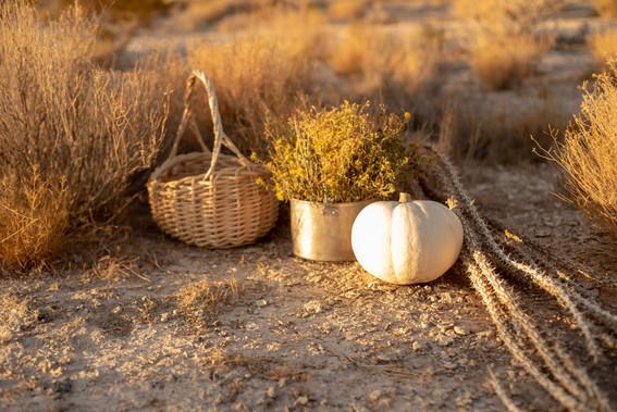 White pumpkin in autumn scene with baske
