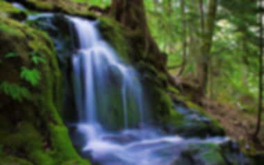 forest waterfall.jpg