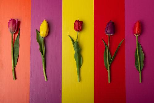 Tulips Contrast