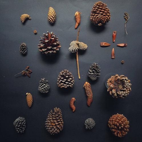 Patchwork pinecones