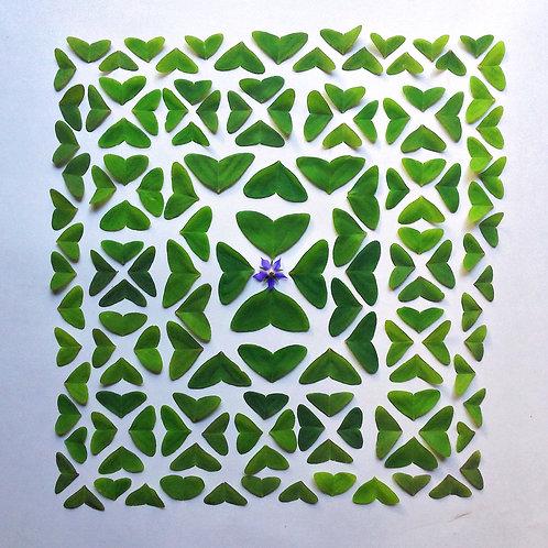 Borage oxalis labyrinth
