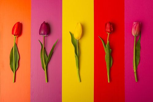 Color Match Tulips