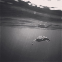Green Turtle Key Largo