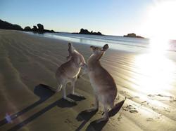 Cape Hillsborough, Australia