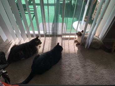 3 Fat, Geriatric Cats