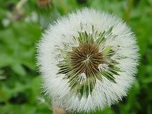 flor-1.jpg