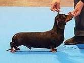 puppy winner.jpg