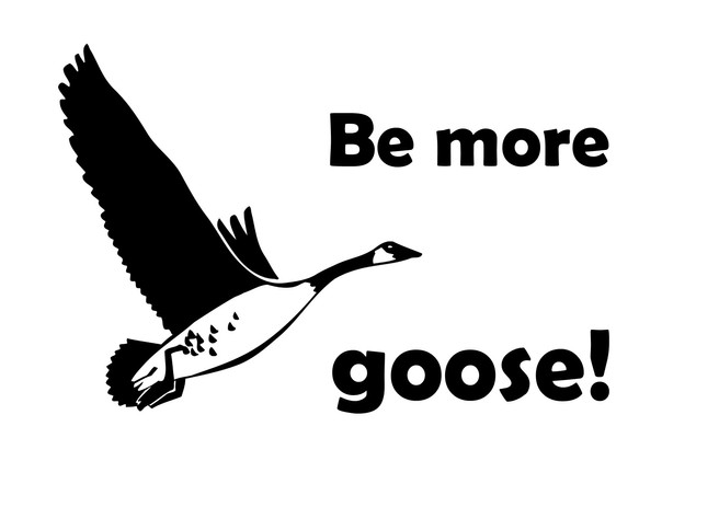 Be more goose