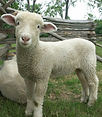 sheep-may-safely-graze-1395605-1280x960_