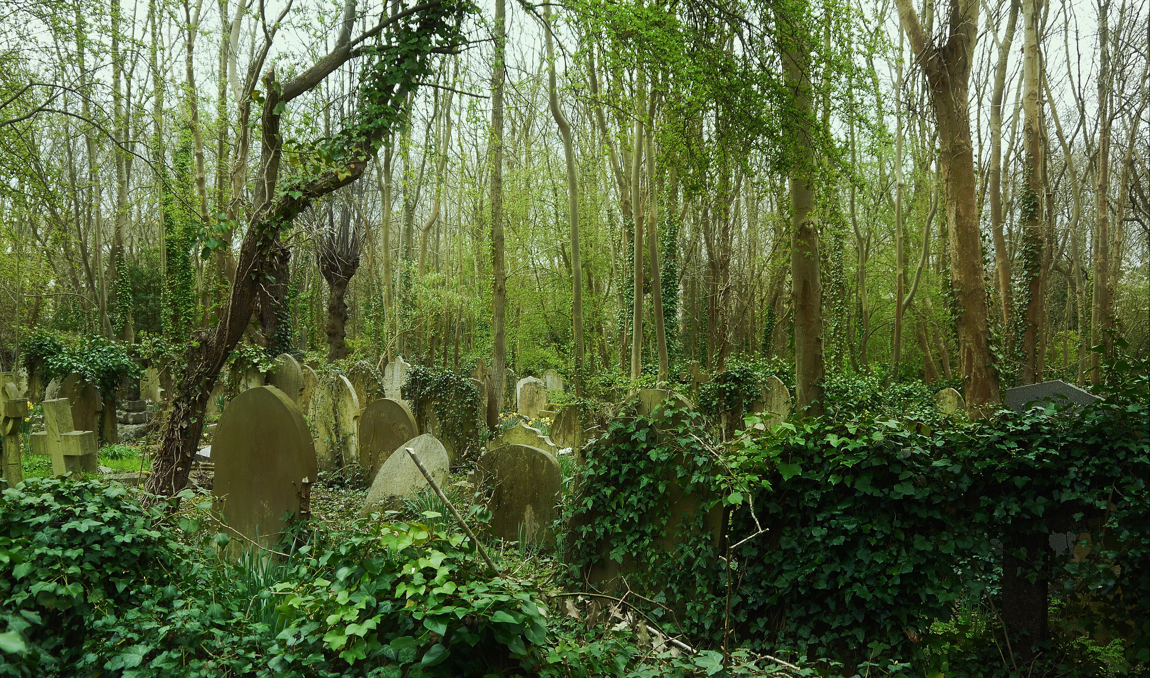 Flickr_-_Duncan-_-_Highgate_Cemetery_(1)