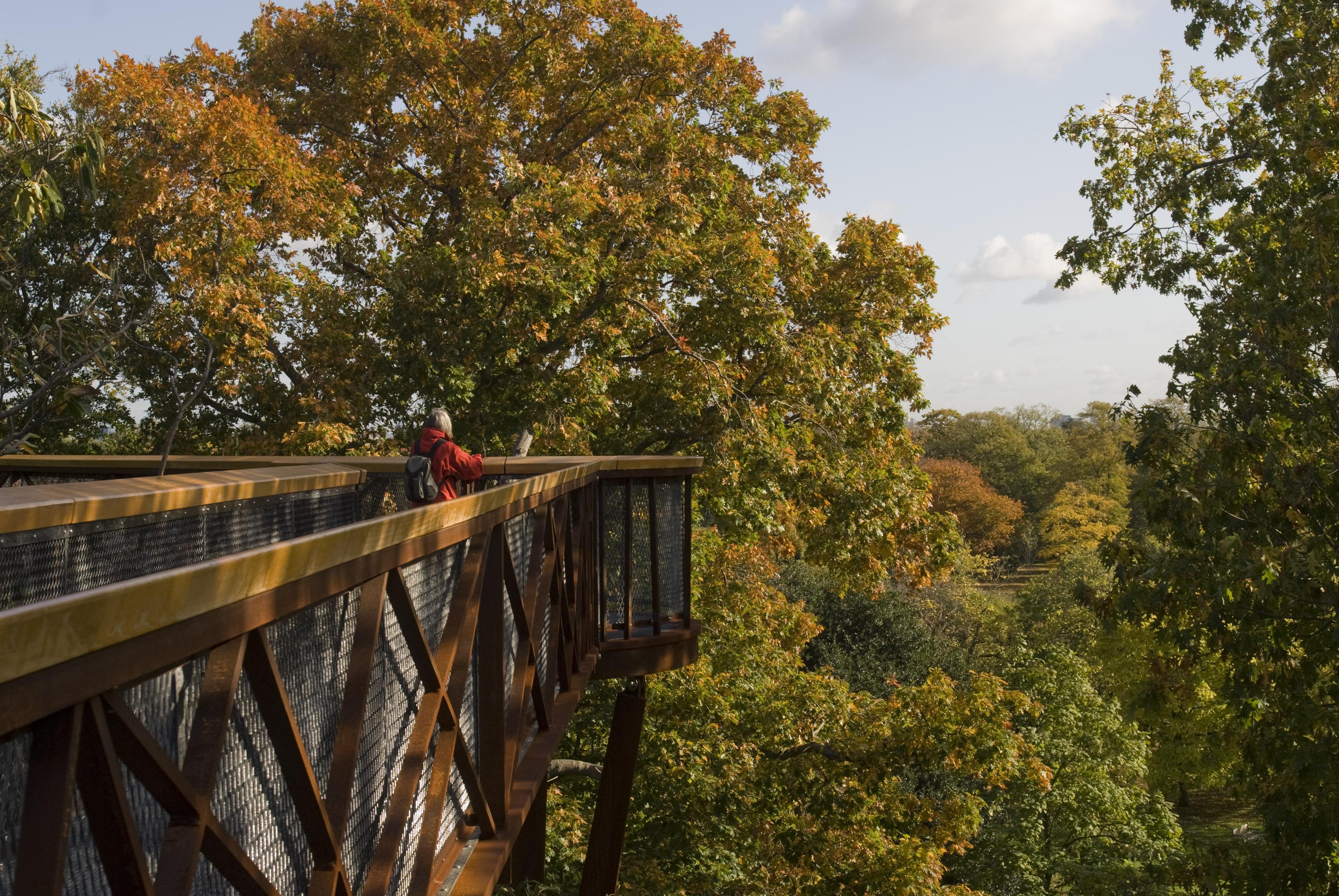 Treetop Walkway credit RBG Kew