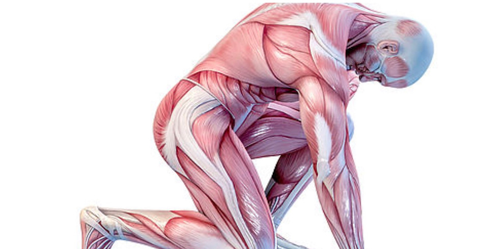 Muscle Painting Workshop - £25