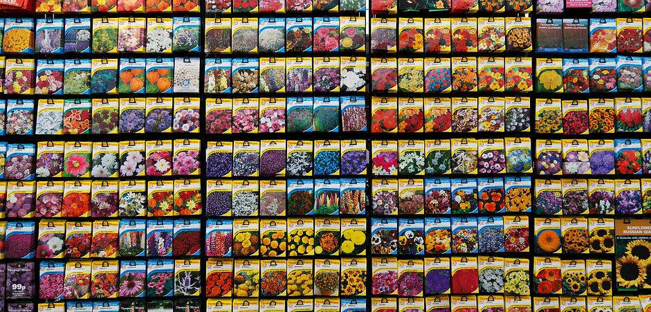 seeds-21941.jpg