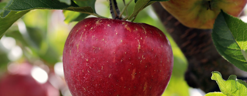 apple-2788616.jpg