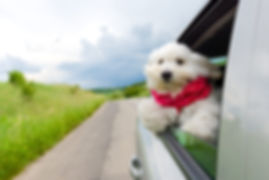 seatbelt1.jpg