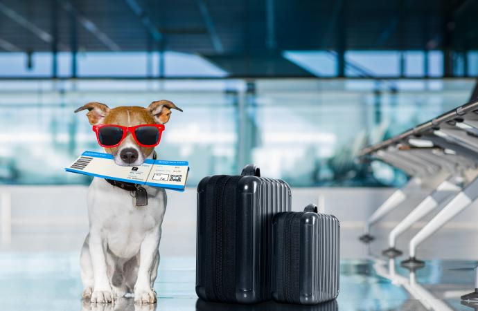 Pet Taxi To or From Lubbock Airport