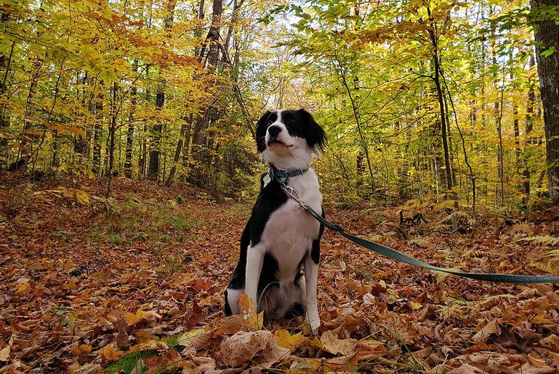 Dog-on-Leash-Sitting-In-Woods_edited.jpg