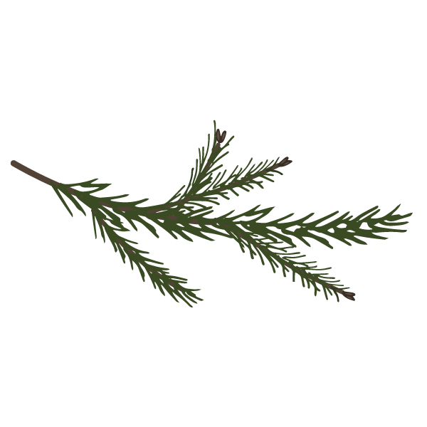 Pine%20Spruce%20Branches%207_edited.png