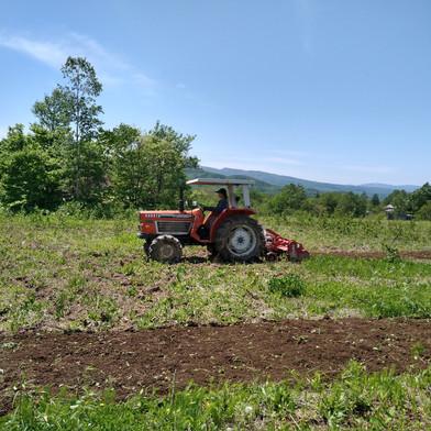 ヴィンヤードの一部に野菜を植えます