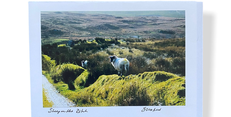 Sheep on the Ditch Greetings Card