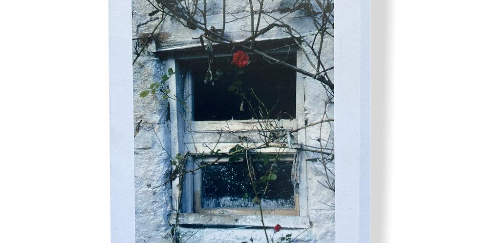 Rose in Irish Window Greetings Card