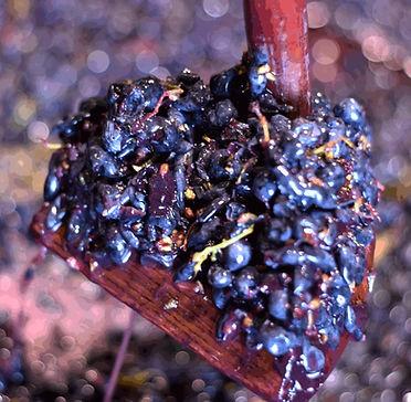 cannonatura uve