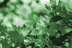 leaves-3001812_1920