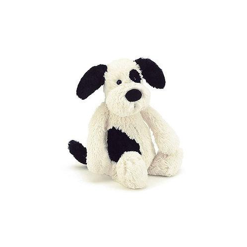Bashful small pup