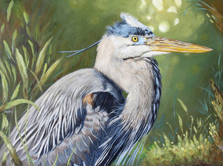 Great Blue Heron by André Mata.jpg