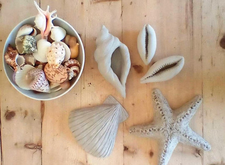 Clay, Shells & Life drawing....