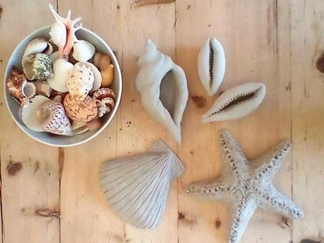Clay, Shells & Life drawing....