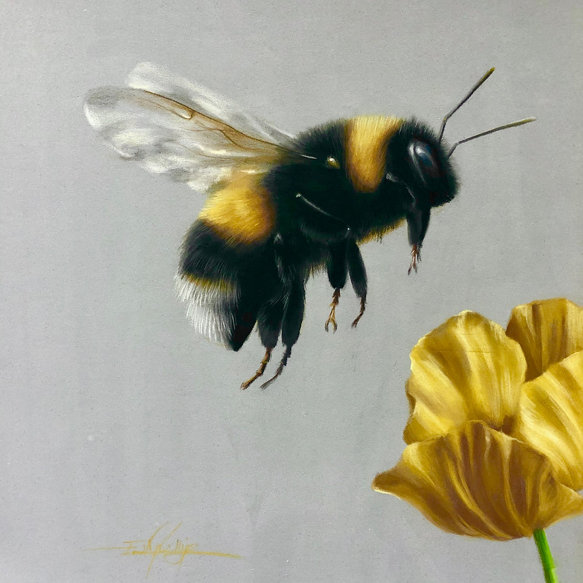 Draw a Bee in Pastel Pencils