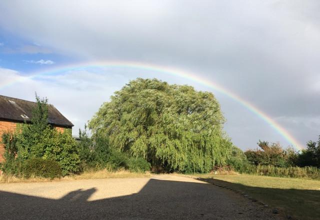 thumbnail_willows&rainbow.jpg