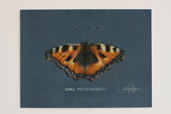 Beginner's Butterfly Class in Pastel Pencils