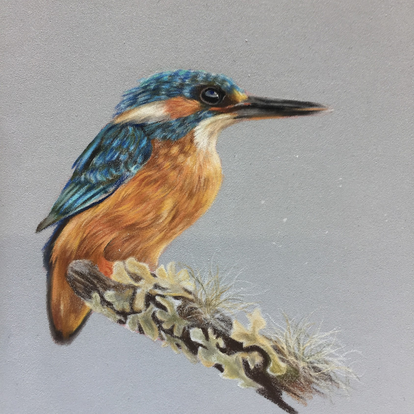 Create a Kingfisher in Pastel Pencils