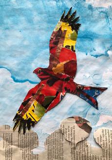 Red kite flying high.jpg