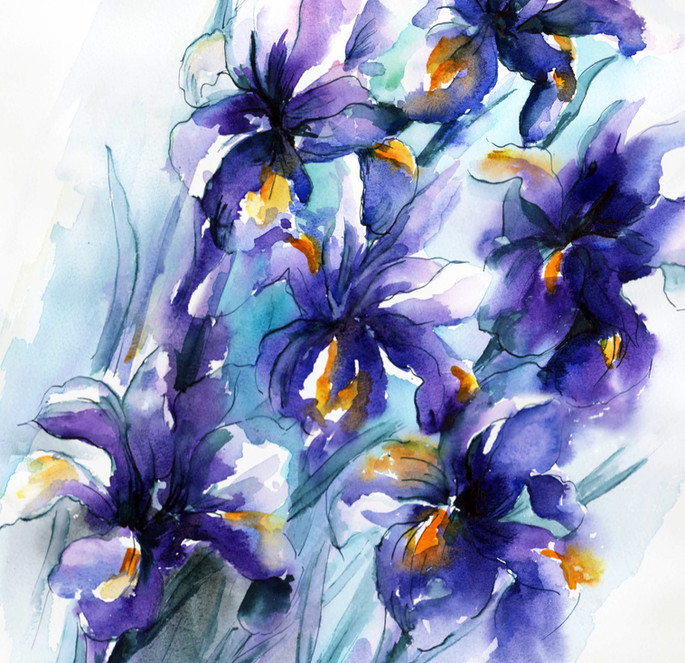 Vibrant iris A3 for printing[12078].jpg