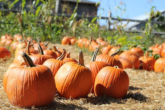 FAMILY WORKSHOP: Pumpkin Painting