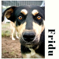 Fridu