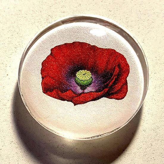 Poppy 38mm (1.5'') Handmade Glass Dome Magnet