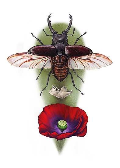 Stag Beetle and Mandible with Poppy Vinyl Sticker