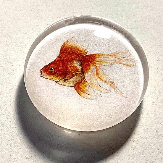 Goldfish 38mm (1.5'') Handmade Glass Dome Magnet