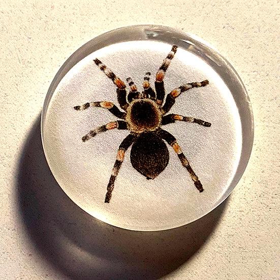 Tarantula 38mm (1.5'') Handmade Glass Dome Magnet