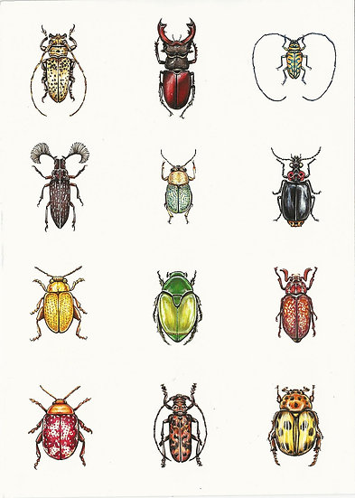 Bold Little Beetle Bugs Limited Print