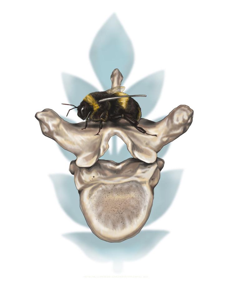 Bee and Vertebrae.jpg