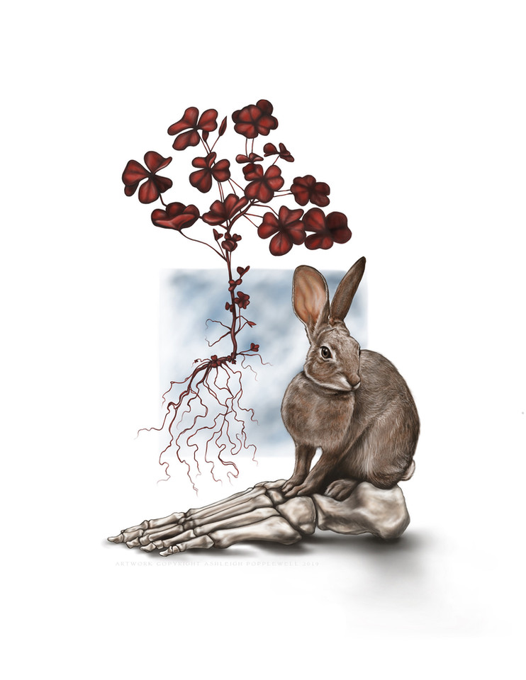Hare with Foot and Clover.jpg